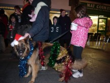 Festively dressed German Shepherd