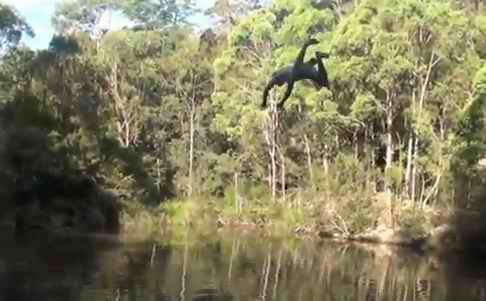 video still of boy diving into forest lake