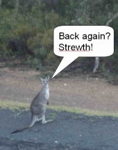"Kangaroo saying ""Back again? Strewth!"