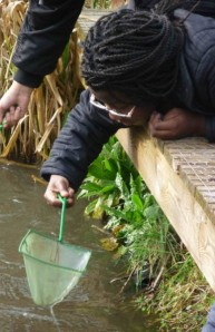 Girl pond-dipping